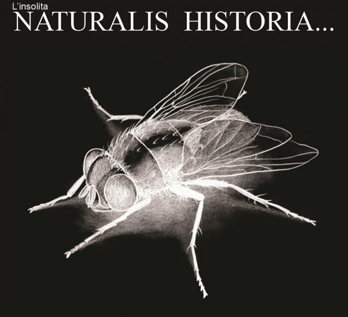 L'insolita naturalis historia di Valerio Porru